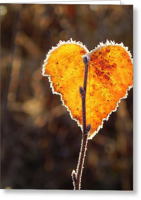 Frosty's Heart Of Gold Greeting Card