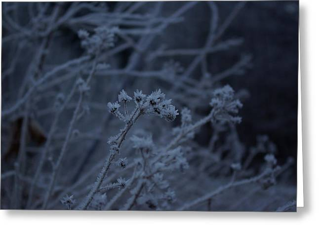 Frozen Buds Greeting Card