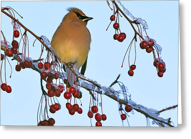 Frozen Dinner  Greeting Card by Tony Beck