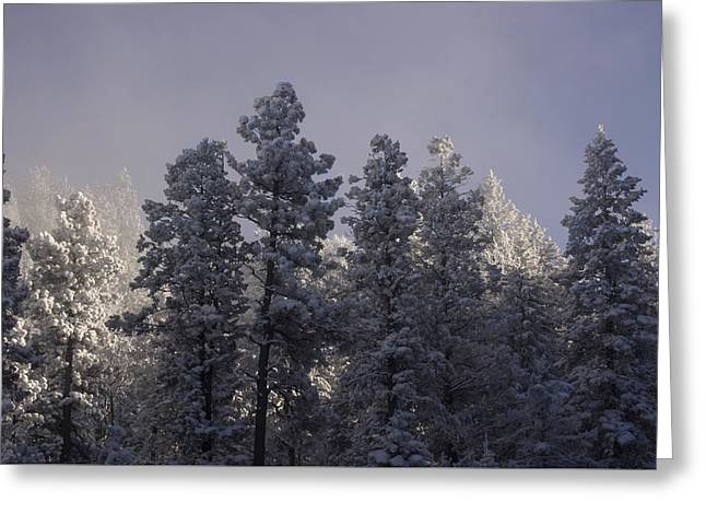 Greeting Card featuring the photograph Frozen by Ellen Heaverlo
