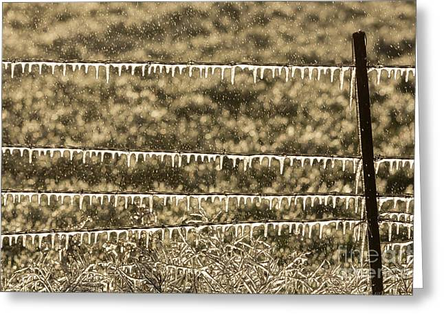 Greeting Card featuring the photograph Frozen Fence by Brenda Tharp