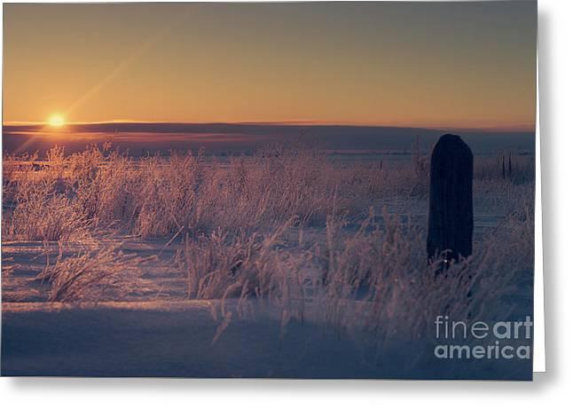 Frozen Field Sunrise Greeting Card by Ian McGregor