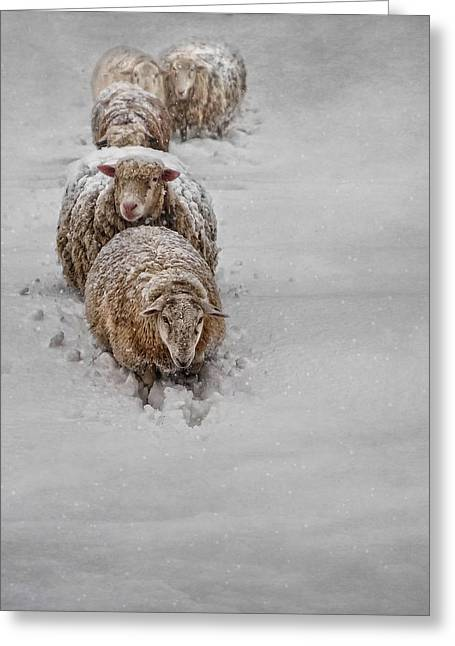Sheep Photographs Greeting Cards - Frozen Fleece Greeting Card by Robin-lee Vieira