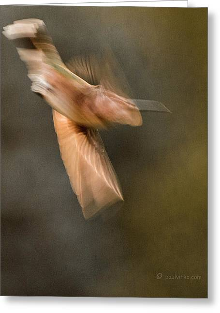...frozen Flight Hummingbird.... Greeting Card