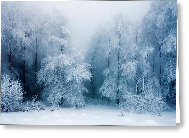 Frozen Forest Greeting Card by Evgeni Dinev