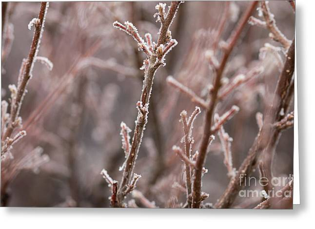 Greeting Card featuring the photograph Frozen Garden by Ana V Ramirez