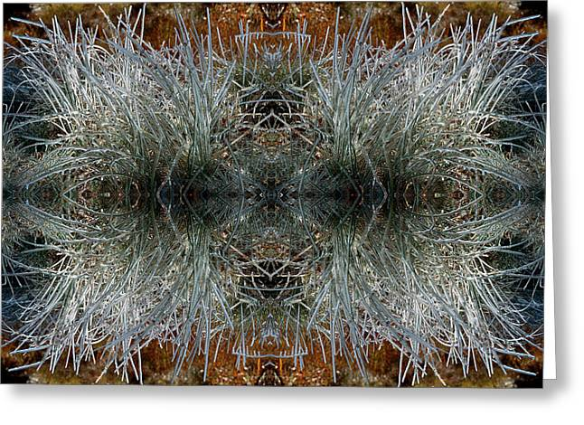 Frozen Grass Abstract Greeting Card by Gary Cloud