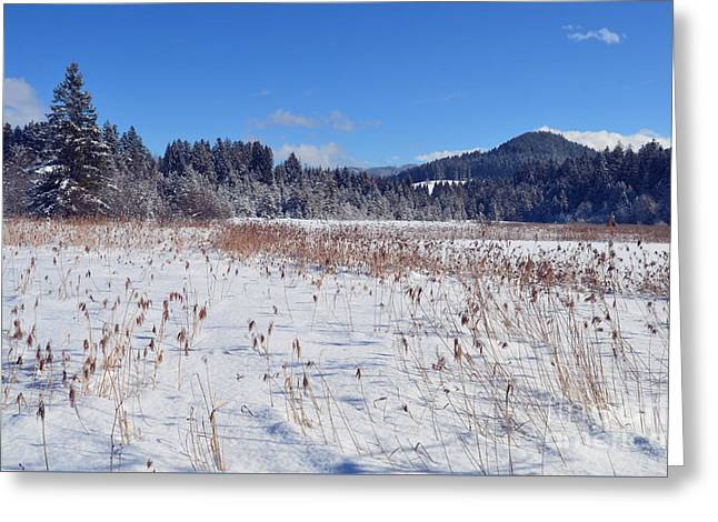 Frozen Lake  Greeting Card by Sabine Jacobs