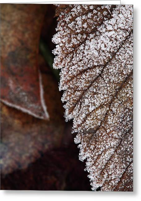 Jouko Mikkola Greeting Cards - Frozen leaf Greeting Card by Jouko Mikkola