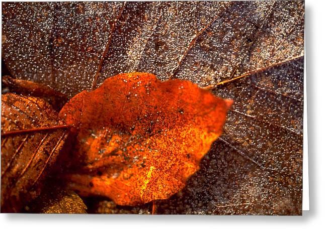 Frozen Leaf Greeting Card by Michael Mogensen