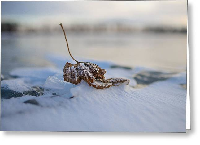 Frozen Leaf On Lake Reno Greeting Card