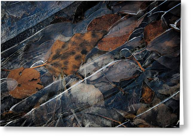 Frozen Leaves In Fall Greeting Card by Jonathan Hansen