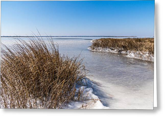 Frozen Marsh Greeting Card
