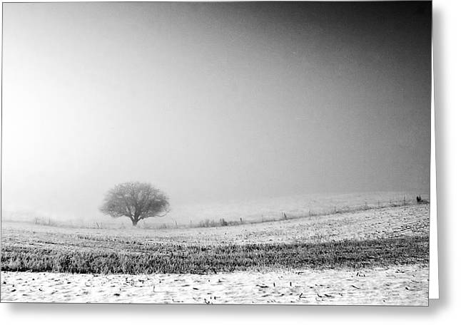 Frozen Mist Greeting Card by Todd Klassy