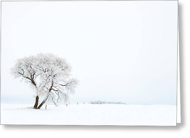 Frozen Morning Greeting Card