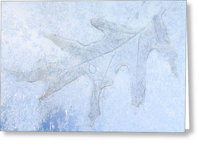 Frozen Oak Leaf Imprint Greeting Card by Kathy M Krause