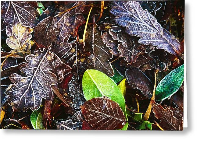 Frozen Oak Leaves, Glenveagh National Greeting Card by Gareth McCormack