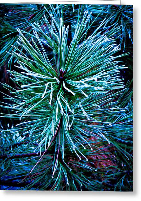 Frozen Pine Needles  Greeting Card