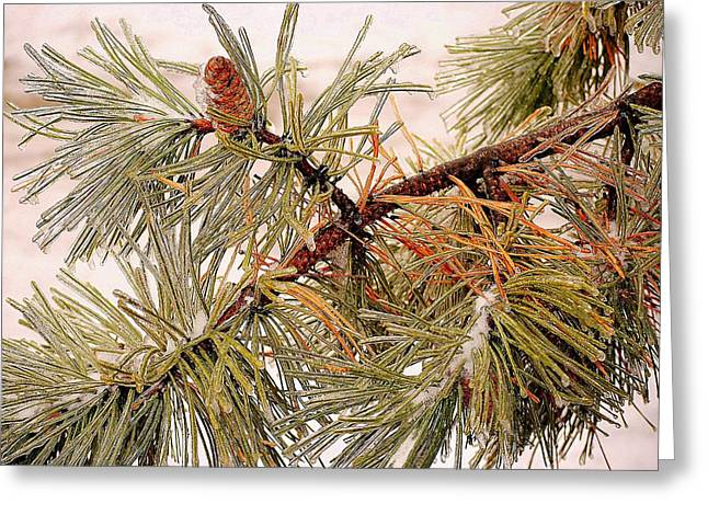Frozen Pine Greeting Card by Frozen in Time Fine Art Photography