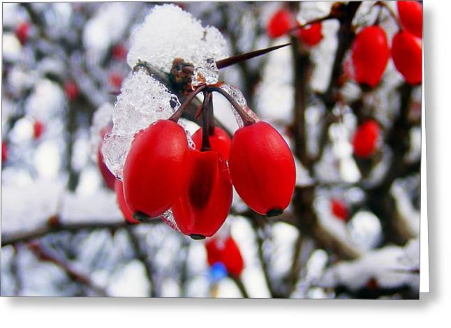 Frozen Red Berries Greeting Card by Ms Judi