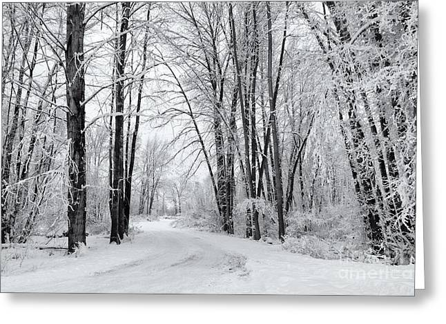 Frozen Road Greeting Card by Mike Dawson