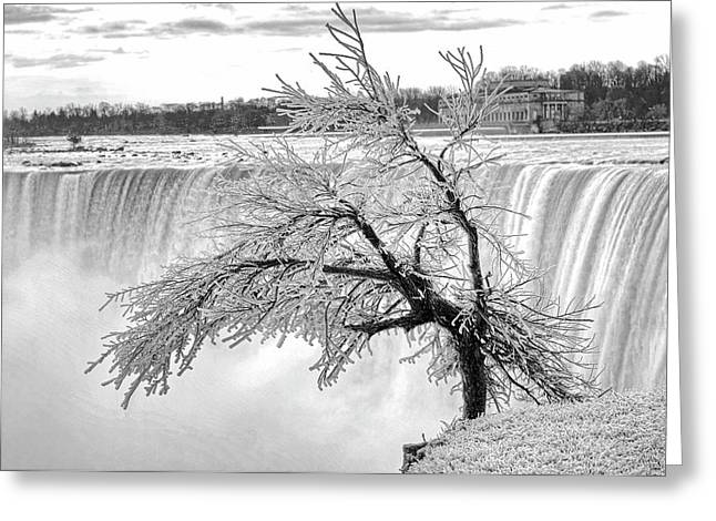 Frozen Tree Near Niagara Falls Greeting Card