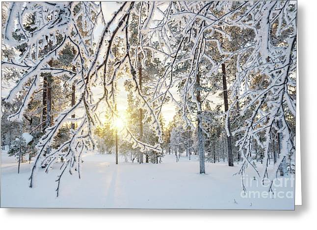 Frozen Trees Greeting Card by Delphimages Photo Creations
