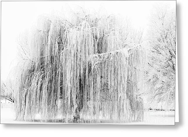 Frozen Willow Greeting Card by Mike Dawson