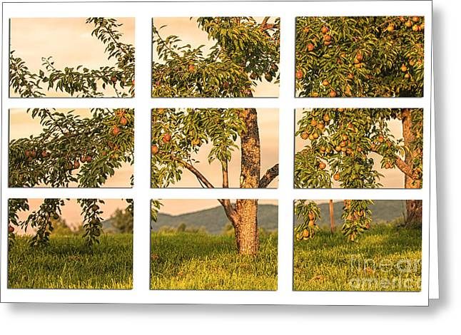 Fruit In The Orchard Through The Window Pane Greeting Card