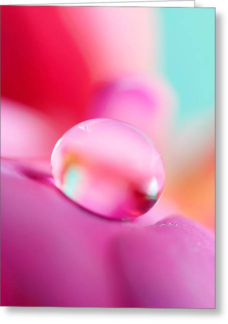 Fuchsia Drop Greeting Card