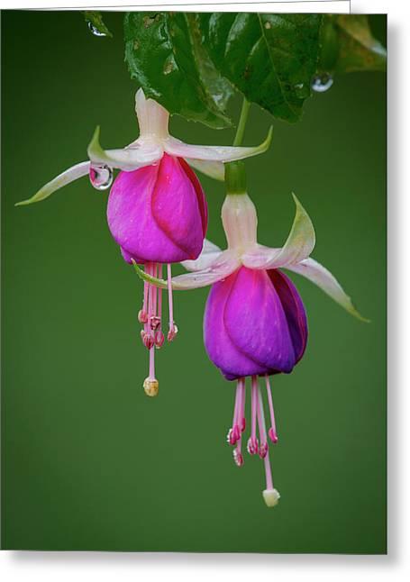 Greeting Card featuring the photograph Fuchsia Flower, Nuwara Eliya, 2012 by Hitendra SINKAR