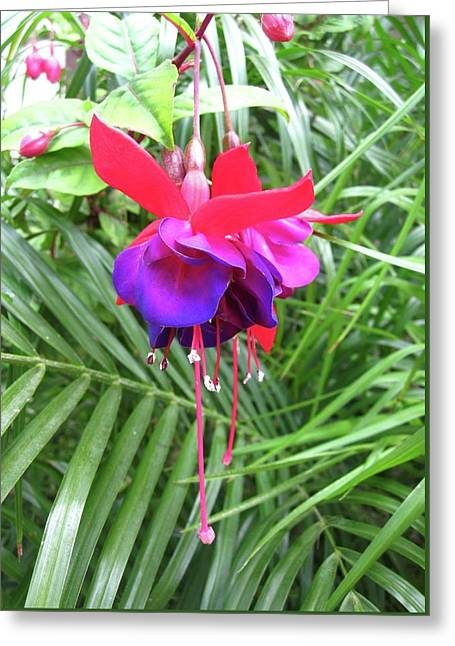 Greeting Card featuring the photograph Fuchsia by Mary Ellen Frazee