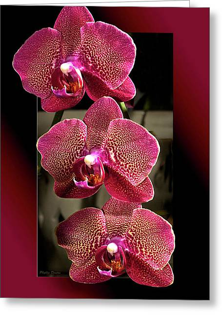 Fuchsia Orchids Oof Greeting Card