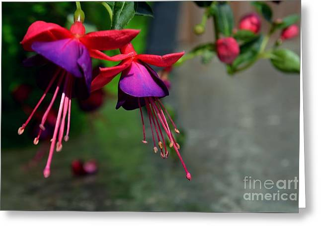 Fuchsia Original Photo Greeting Card
