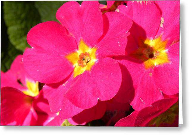 Greeting Card featuring the photograph Fucsia by Fanny Diaz