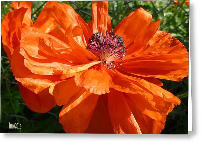 Full Bloom Orange Poppy Greeting Card by Tina M Wenger
