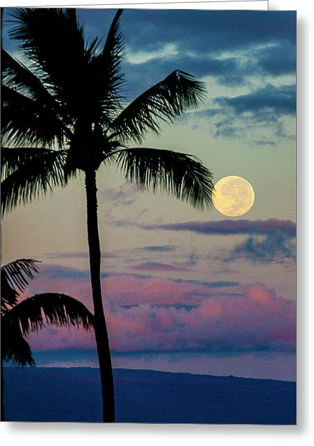 Full Moon And Palm Trees Greeting Card