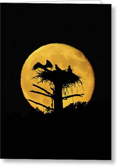 Full Moon Back Of Osprey Nest Greeting Card