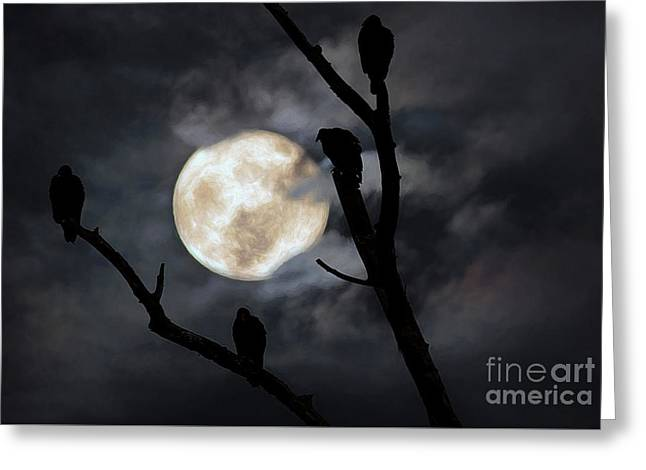 Full Moon Committee Greeting Card by Darren Fisher