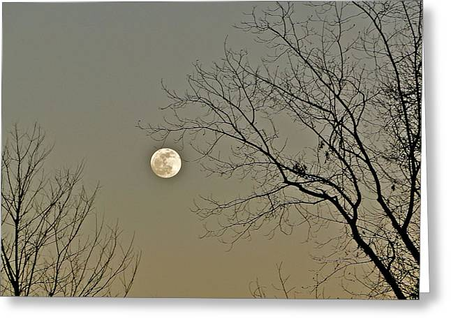Full Moon In January Greeting Card