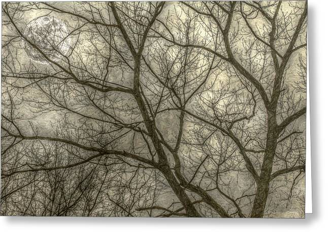 Full Moon In Spring Trees Yellow Greeting Card by Randy Steele