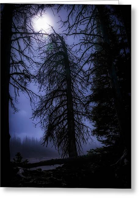Full Moon In The Woods Greeting Card