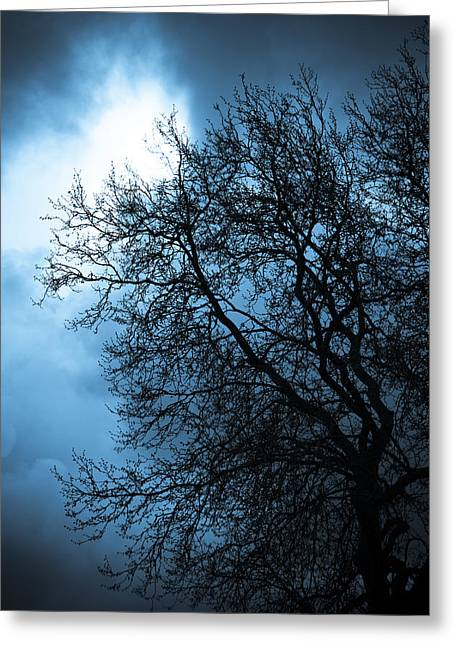 Sillouette Greeting Cards - Full Moon Greeting Card by Nila Newsom