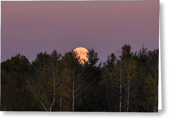 Full Moon Over Orchard Greeting Card