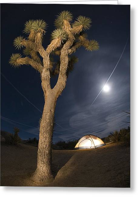 Full Moon Rising Over A Joshua Tree Greeting Card by Rich Reid