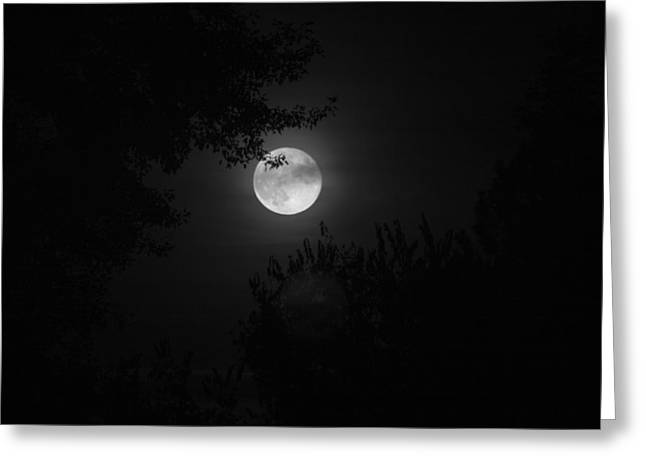 Full Moon With Branches Greeting Card