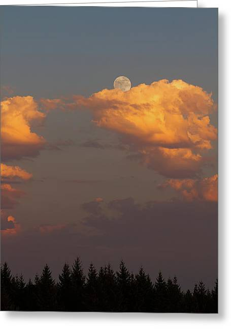 Full Moonrise Over Tree Silhouette Greeting Card by David Gn