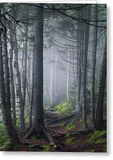 Fundy Fog Greeting Card