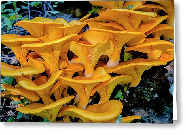 Fungi Greeting Card by Jack R Perry