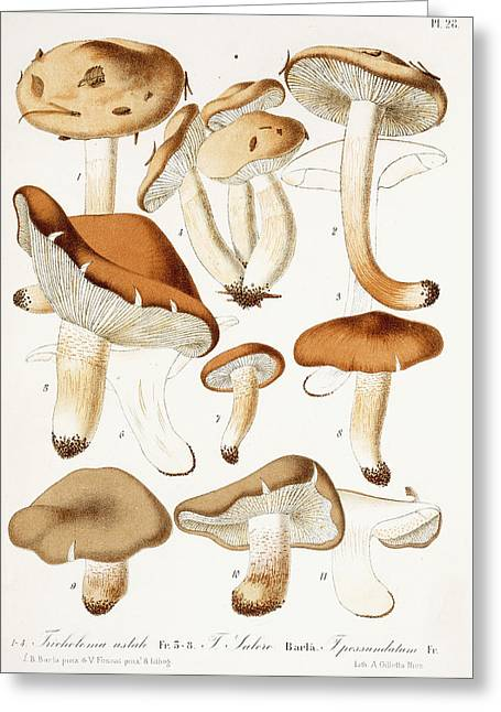 Fungi Greeting Card by Jean-Baptiste Barla